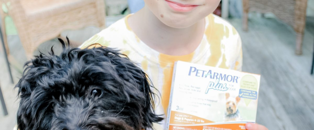 Protecting Your Pet In The Warm Summer Months