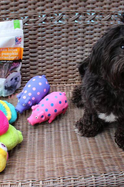 How to Spoil Your Pup Without Breaking The Bank